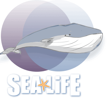 sea life and whale small